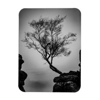 Tree on a Cliff Rectangular Photo Magnet