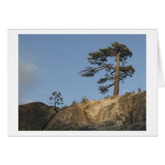Tree on Ridge East of Kibbie Lake Outlet Card