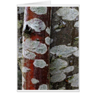 Tree on Tree Blank Card