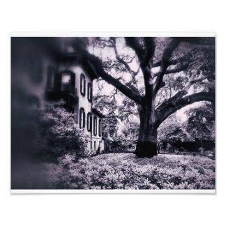 Tree Photo Art