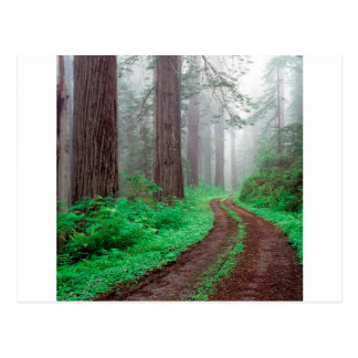Tree Redwood California Postcard