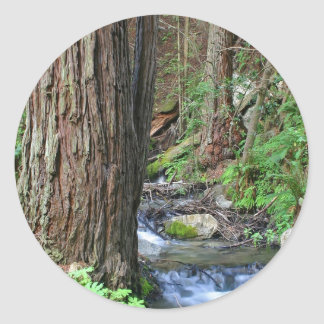 Tree Redwood Stream Classic Round Sticker