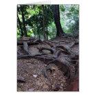 Tree roots on Mt. Kurama Card