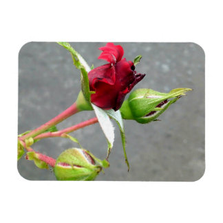 Tree Rosebuds Magnet