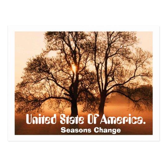Tree, Seasons Change, United State Of Ameica. Postcard