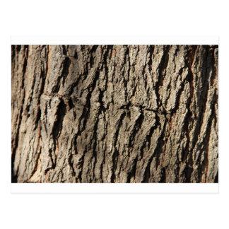 Tree Side Postcard