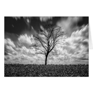 tree silhouette black and white landscape card