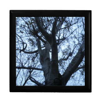 Tree Silhouette Photograph Gift Box