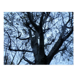 Tree Silhouette Photograph Postcard