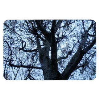 Tree Silhouette Photograph Premium Magnet