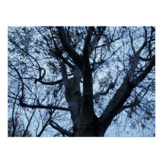 Tree Silhouette Photograph Print