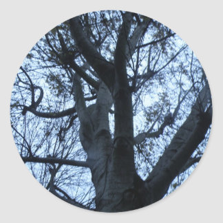 Tree Silhouette Photograph Sticker