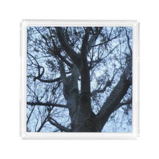 Tree Silhouette PhotographAcrylic Perfume Tray