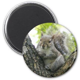 Tree Squirrel 2 Inch Round Magnet