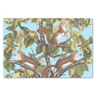 Tree Squirrels Animal Print Squirrel Pattern Print Tissue Paper