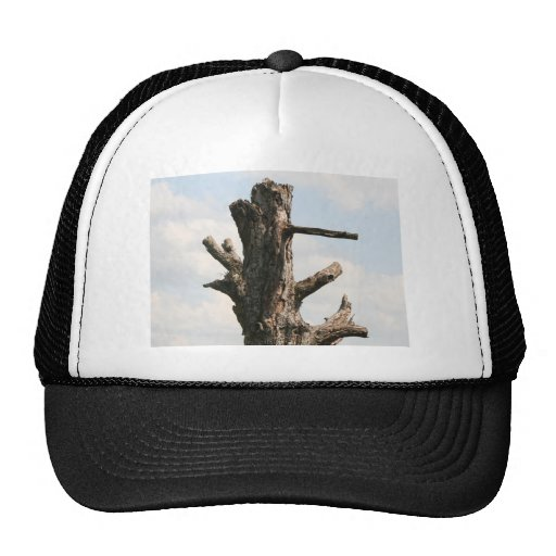 Tree Still Standing Hat