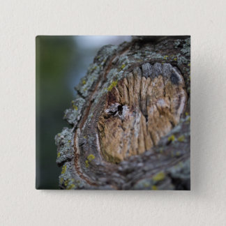 Tree Stump Photography 2 Inch Square Button