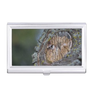 Tree Stump Photography Business Card Holder
