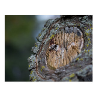 Tree Stump Photography Postcard