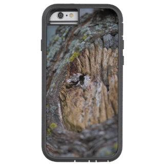 Tree Stump Photography Tough Xtreme iPhone 6 Case