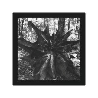 Tree stump roots black and white nature photo canvas print