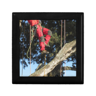 Tree surgeon lumberjack hanging from a big tree gift boxes