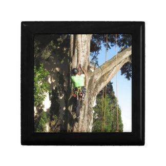 Tree surgeon lumberjack hanging from a big tree jewelry box