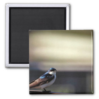 Tree swallow magnet