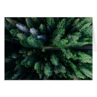 Tree top forest with hiking path colorful green card