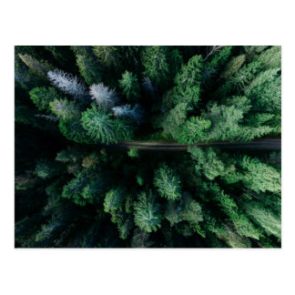 Tree top forest with hiking path colorful green postcard