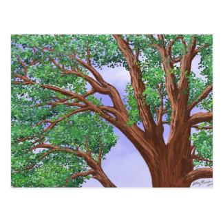 Tree Top Postcard