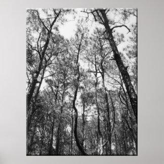 Tree Tops (b/w) Poster