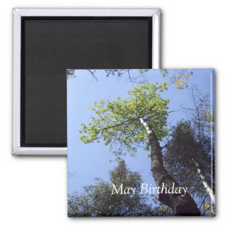 Tree Tops Under Blue Sky- May Birthday Gift Magnet