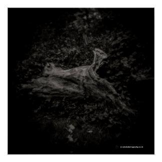 Tree - Toy camera - Diana - Art Poster