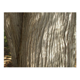 Tree Trunk in Sunshine Postcard
