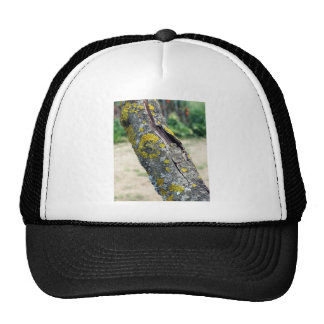 Tree trunk with yellow moss fungus trucker hat