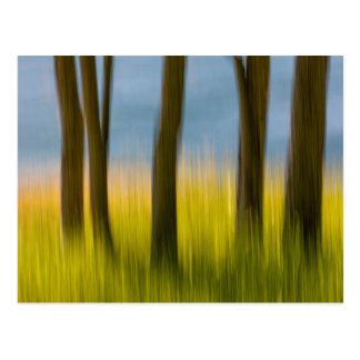 Tree Trunks and Grass | San Juan Islands, WA Postcard