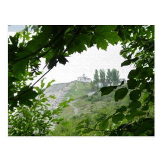 Tree Window Postcard