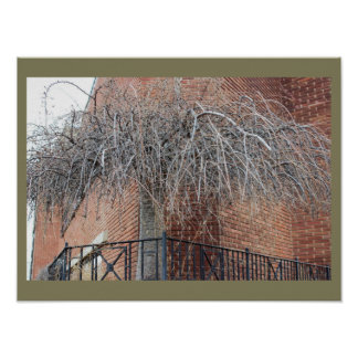 Tree with Bricks Photo Poster