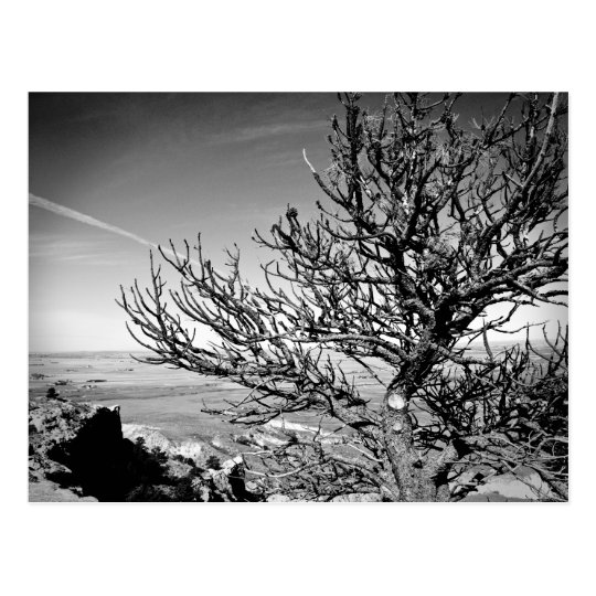 Tree with Contrail Postcard