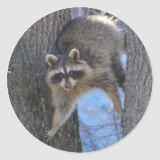 Treed Coon ~ sticker