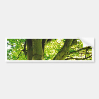 Treee Bumper Sticker