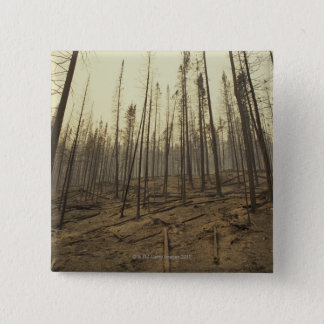 Trees after forest fire 2 inch square button