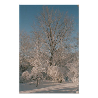 Trees After the Snow Poster