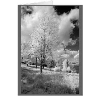 Trees and landscape of rural New Hampshire Card