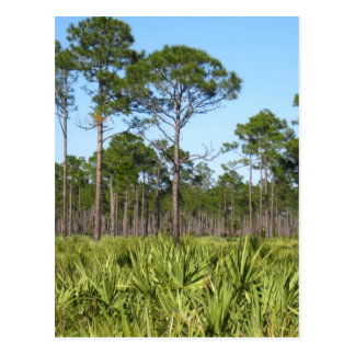 Trees and Saw Palmettos Postcard