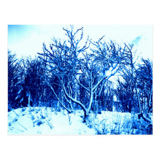 Trees and Snow Scene, Cobalt Blue Postcard