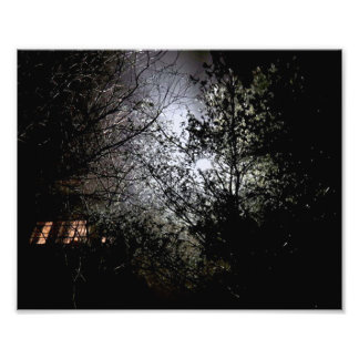 Trees at night photo print