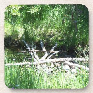 Trees, branch bridge drink coaster
