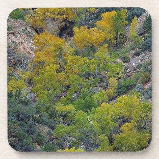 TREES FALL AUTUMN COASTER